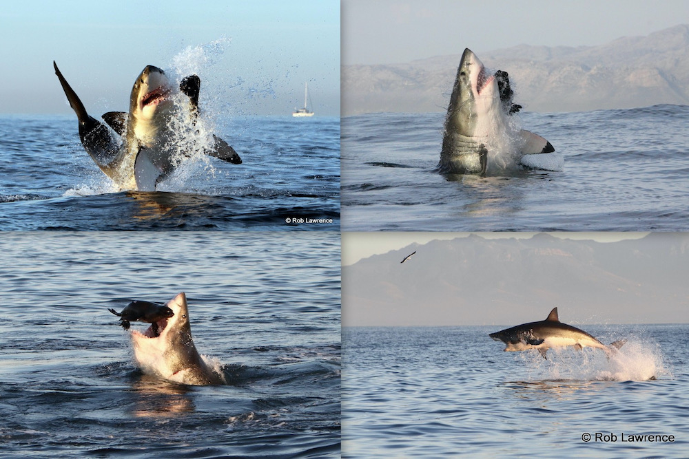 Shark cage diving travelwishlist