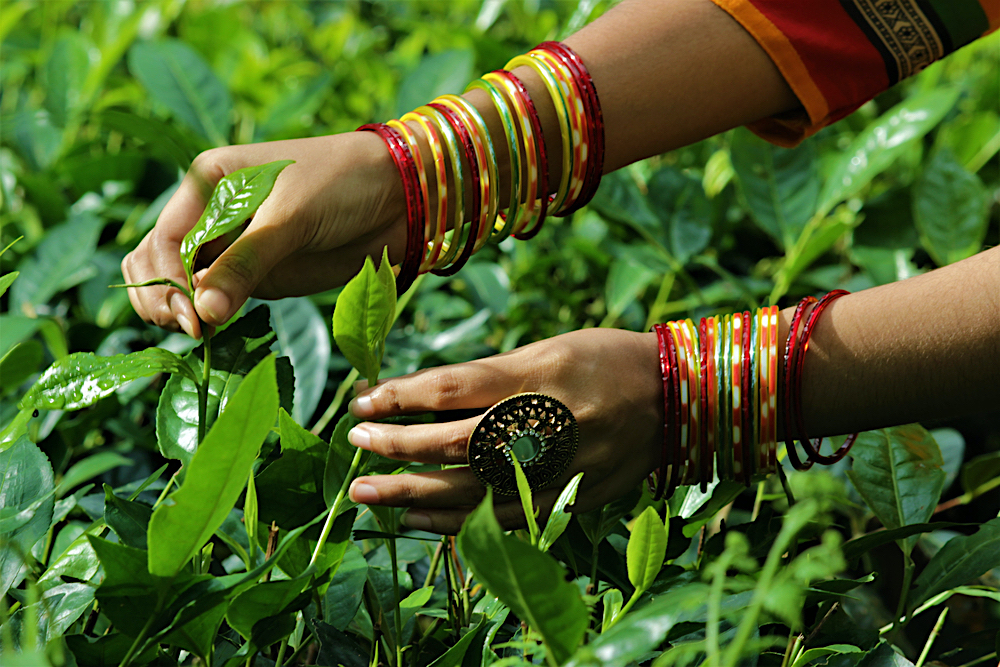 Sylhet Blog twisht