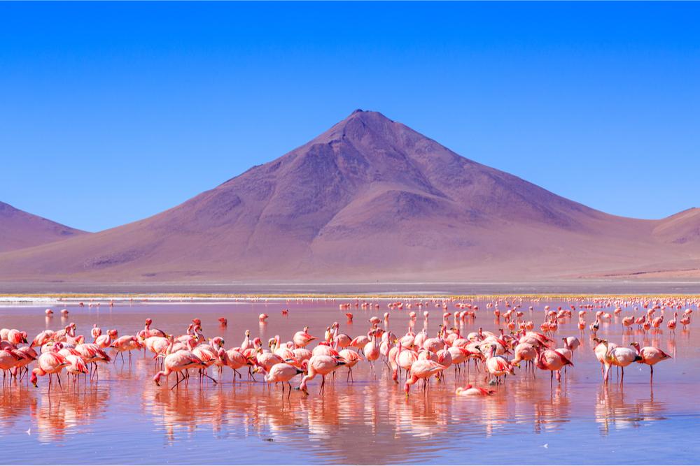 Laguna Colorada, Bolivia, twisht