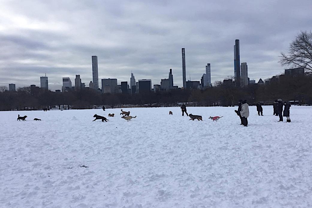 Central Park Environs Walking Tour twisht