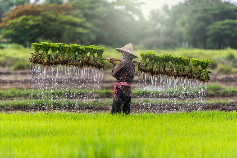 Cambodia blog twisht