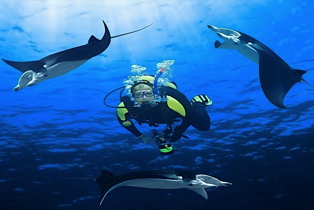 Crazy Dolphin Diving Center