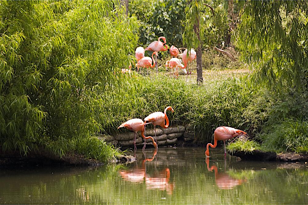 Audubon Zoo New Orleans travelwishlist