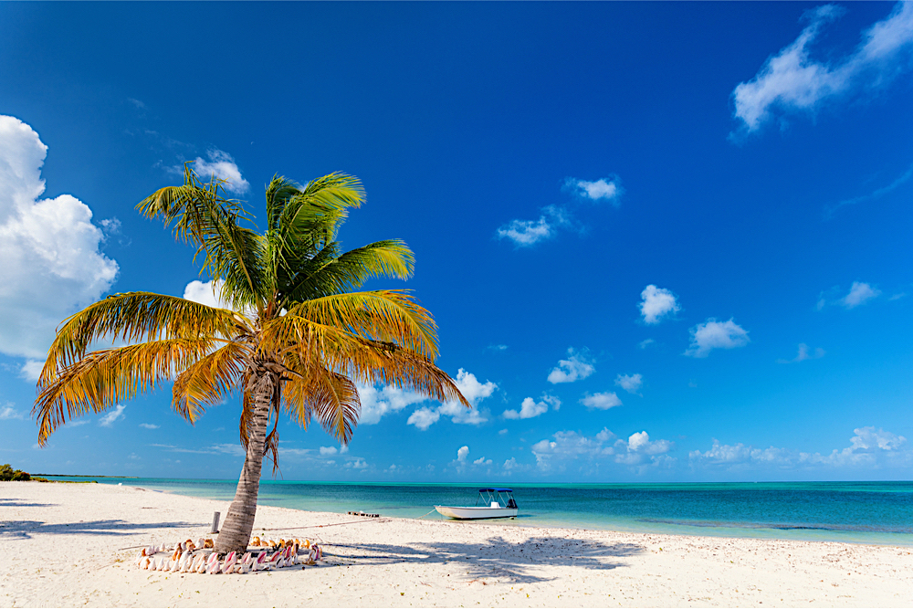 Barbuda twisht blog