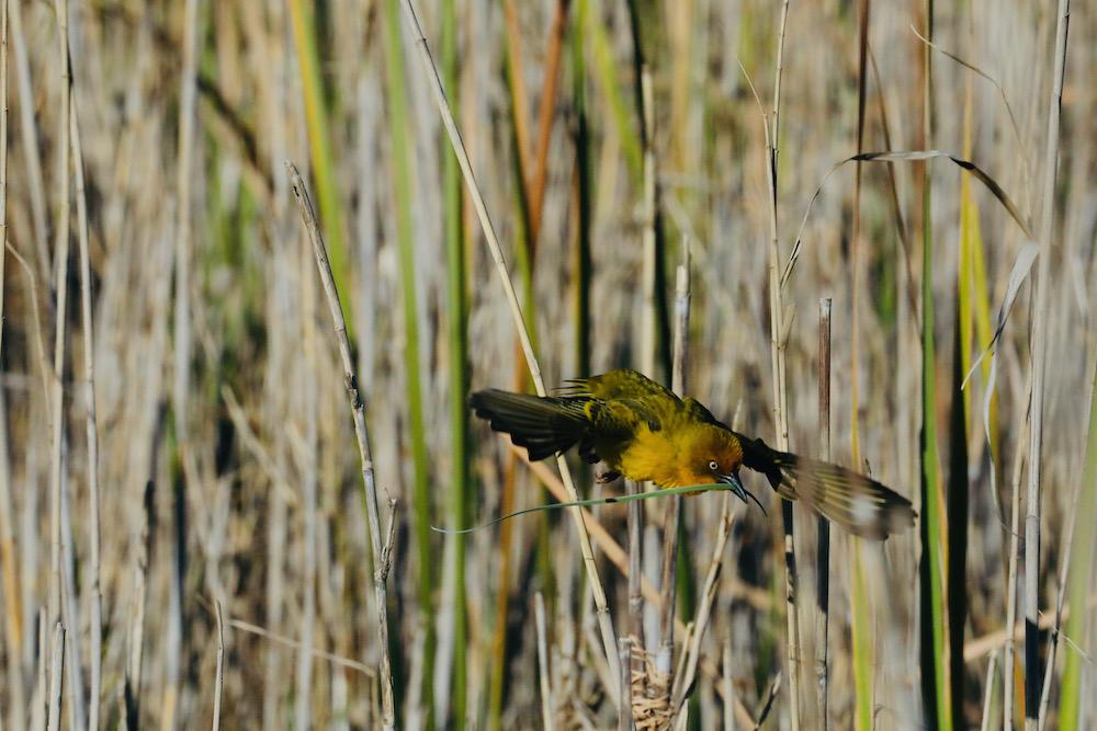 Lower Silvermine Wetlands travelwishlist