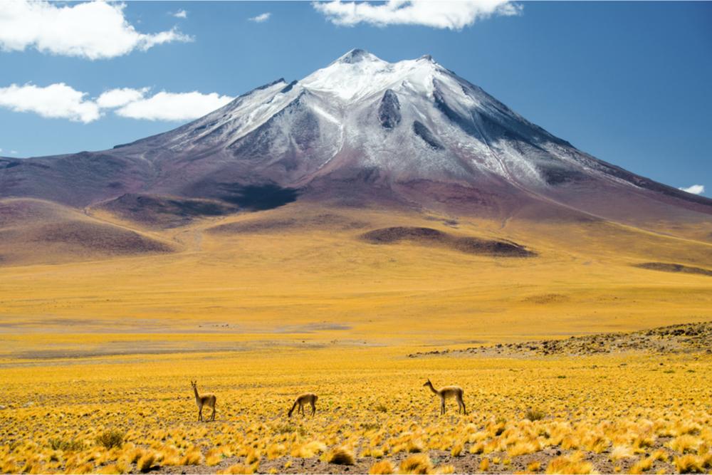 Atacama twisht