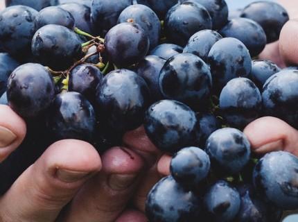 4 of the Best Wine Regions to Visit Before You Die