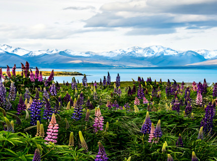 Experience epic New Zealand.
