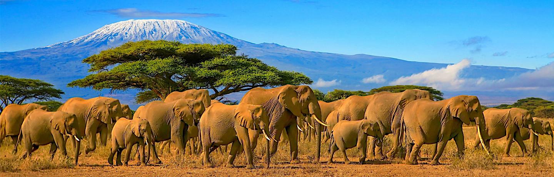 Experience safari & spice in Tanzania